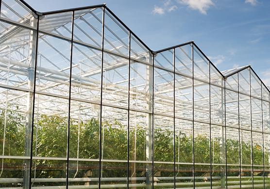 Glastuinbouw - Werkgebieden - Fidus Advies